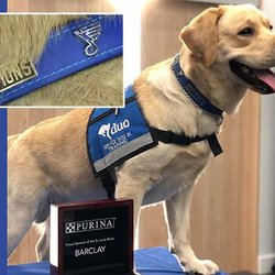St. Louis Blues Mascot Earns First-Ever Stanley 'Pup' Championship Collar